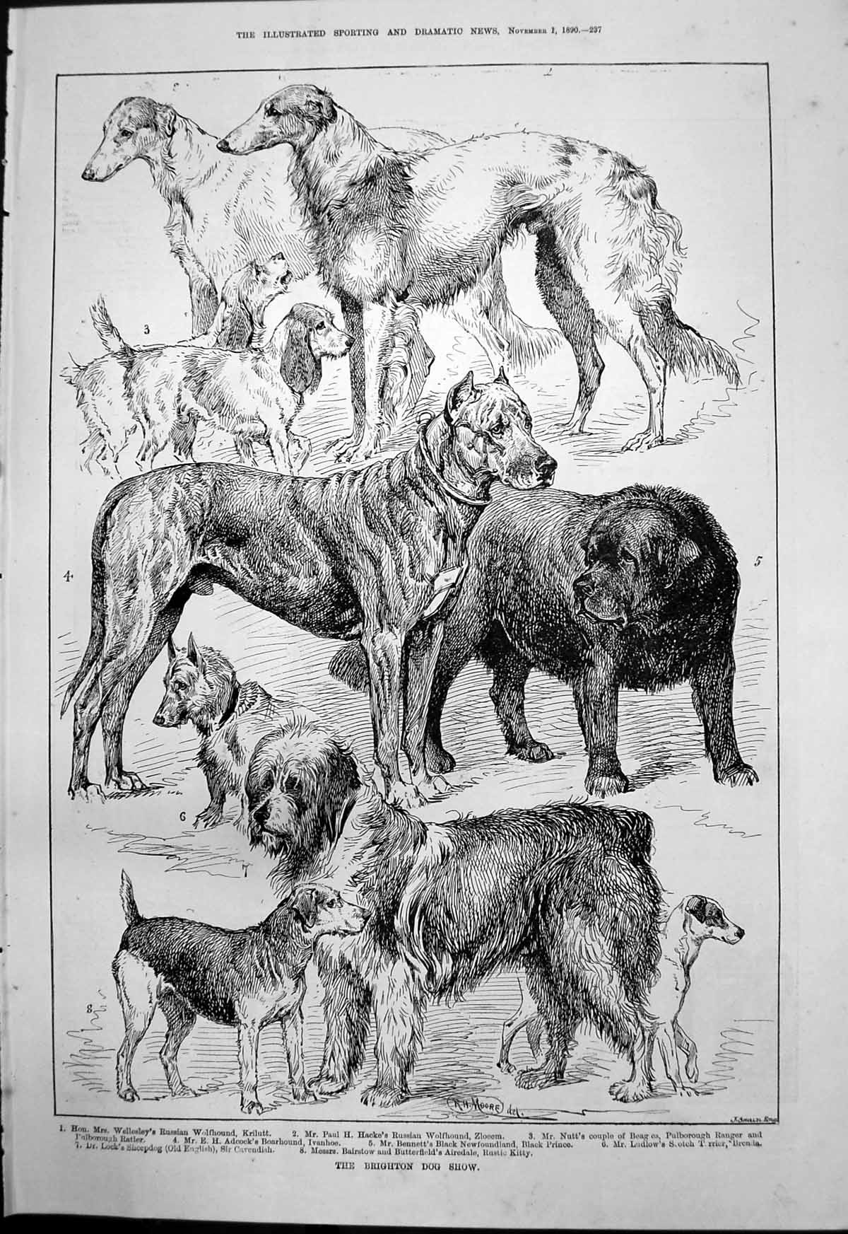 [Print Brighton Dog Show Russian Wolfhound Balaclava Heroes 1890 237T134 Old Original]