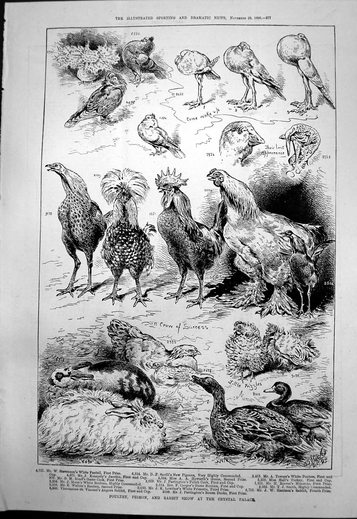 [Print Poultry Pigeon Rabbit Show Crystal Palace Ducks Turkeys 1890 377T134 Old Original]