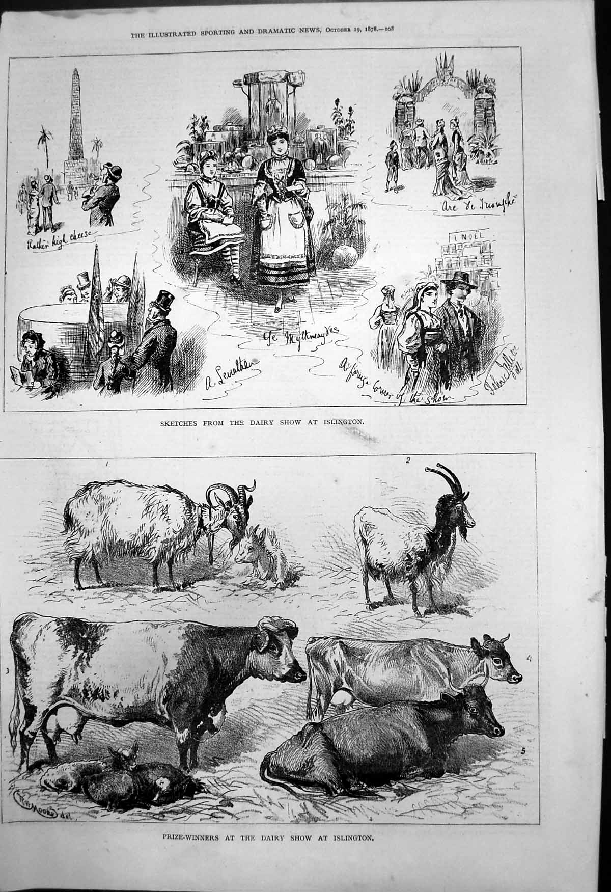 [Print Sketches Dairy Show Islington Prizewinners Cattle Goats 1878 219T142 Old Original]