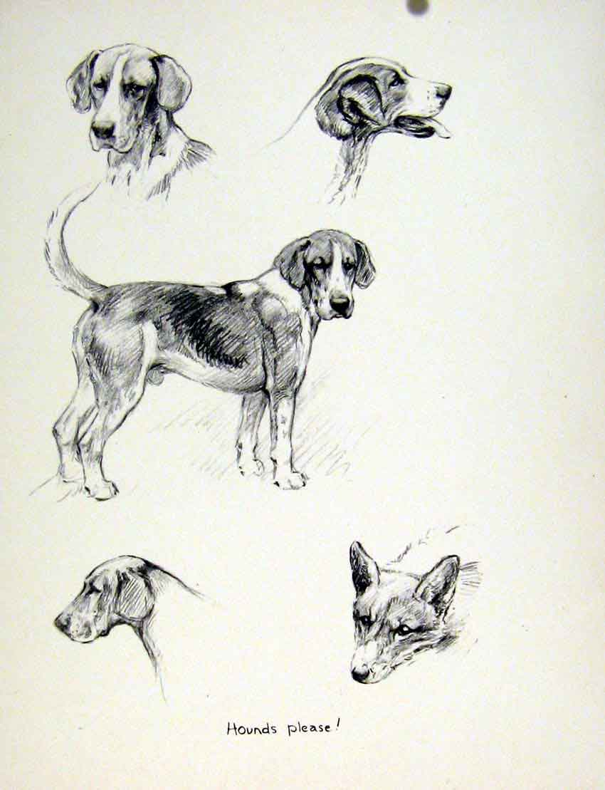 Old-Vintage-Print-Hounds-Sketch-Fine-Art-Drawing-Dog-Puppy-C1936-Pet-Home-20th