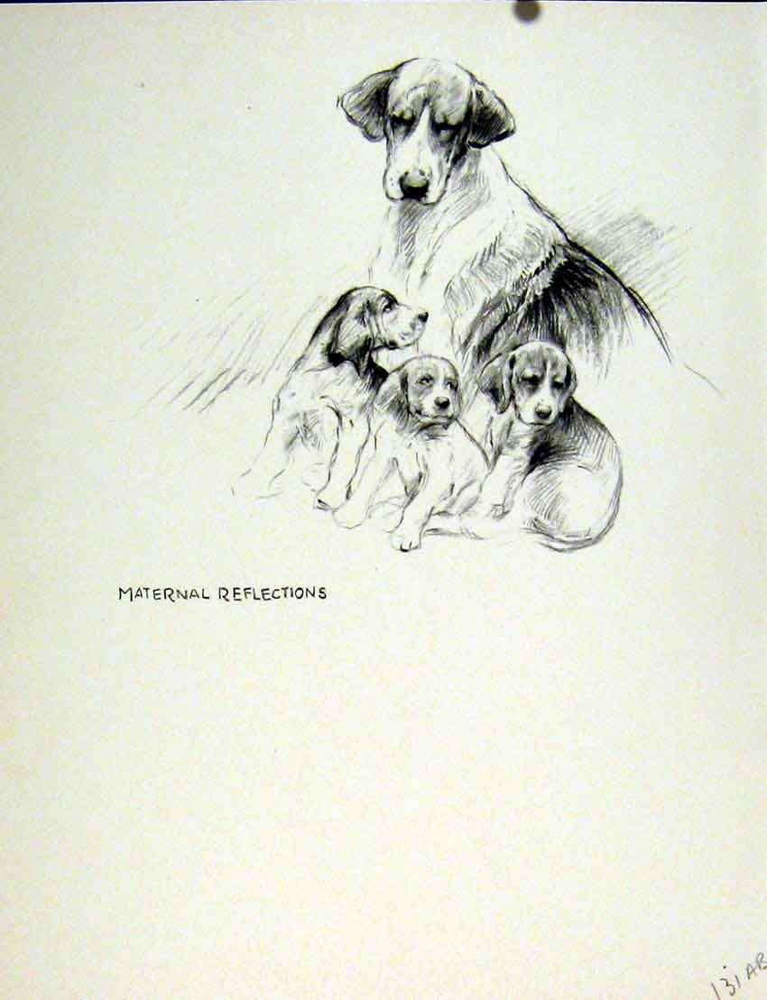 Old-Vintage-Print-Hounds-Sketch-Fine-Art-Drawing-Dog-Puppy-C1936-Pet-Home-20th thumbnail 2