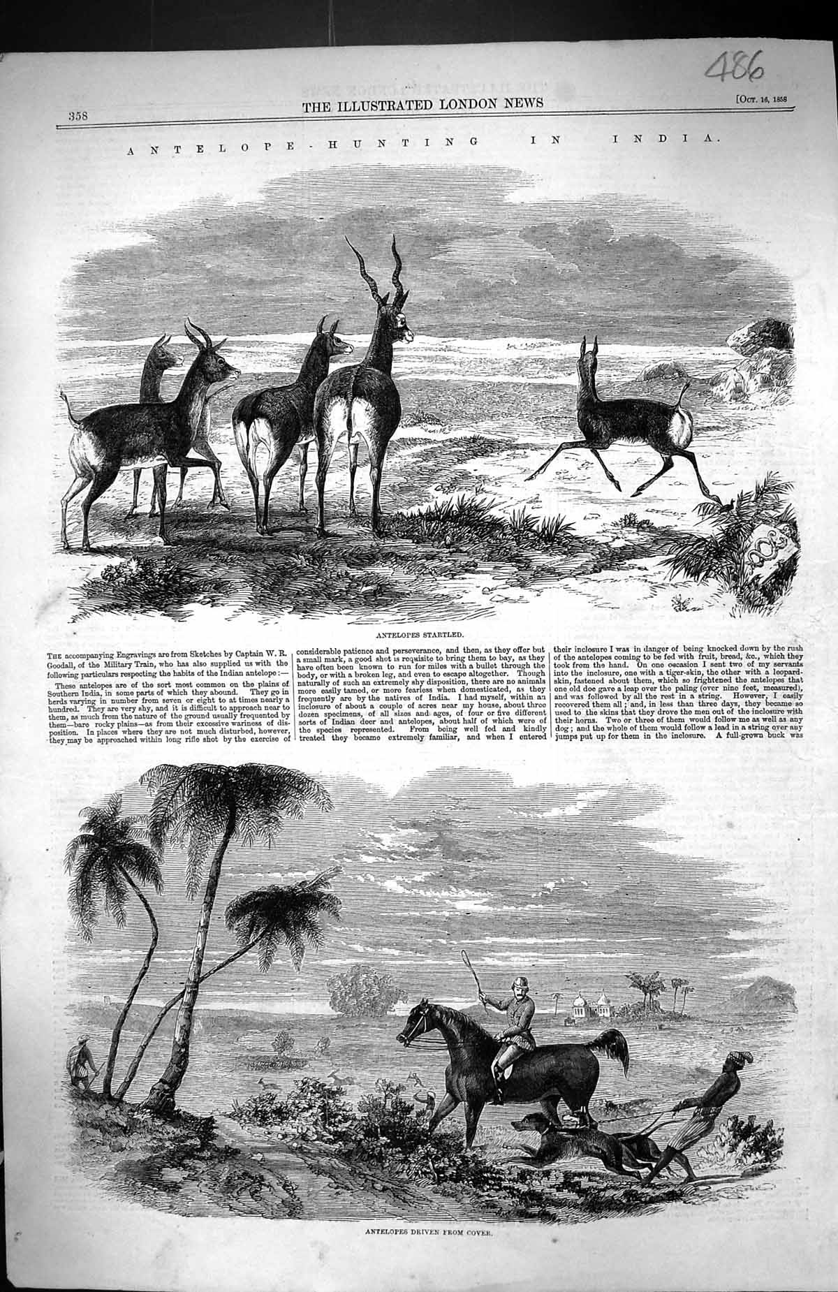 Old-1858-Antelope-Hunting-India-Driving-From-Cover-Sport-Huntsman-Hor-Victorian